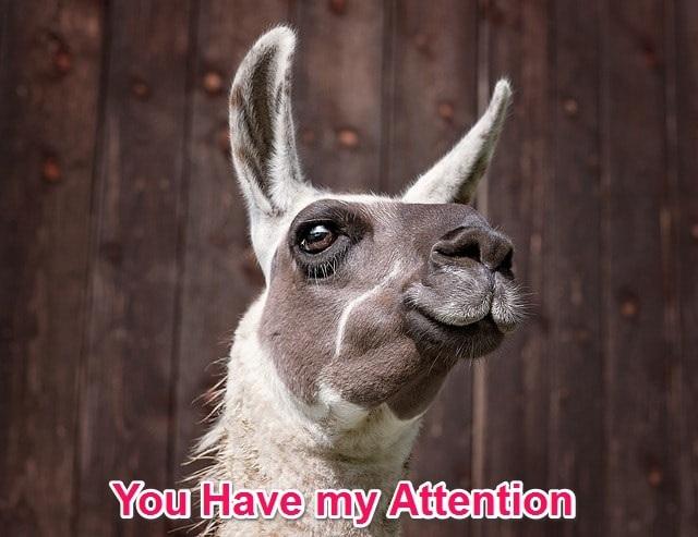 lama attention