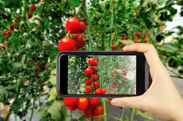 taking photo of garden with smartphone