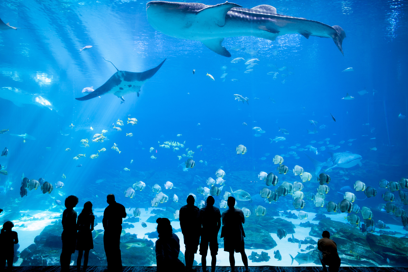 Your Aquarium Blog Needs Great Images Not Just Words