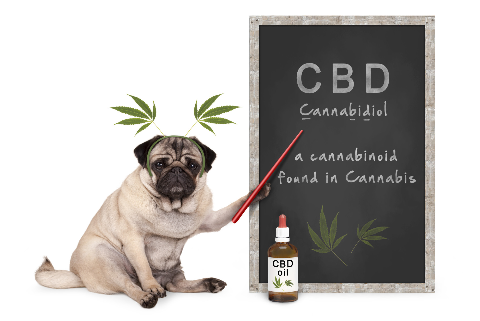 cbd text on chalkboard with dog